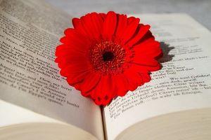 book-3259352_640