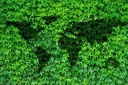 leaves-2874583_640