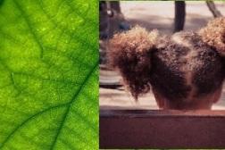 eco leaf black girl -1209927_640